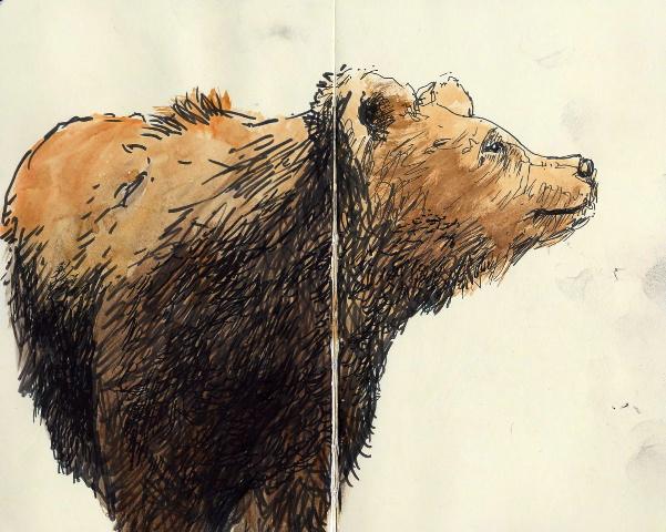 Chambers: Bear