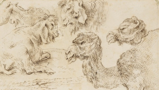 Castiglione: Camels and goats