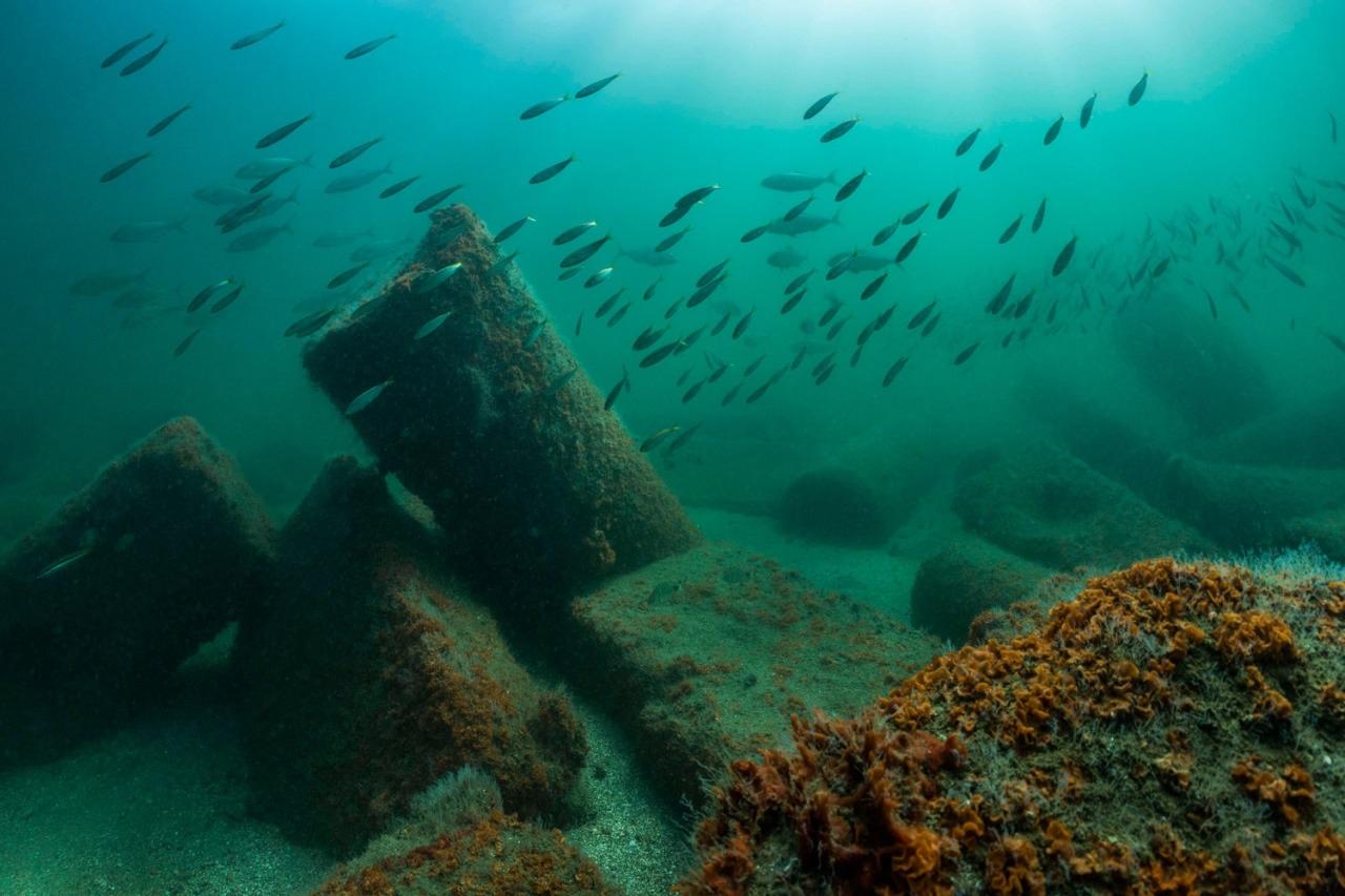 Canopus: Sunken Cities