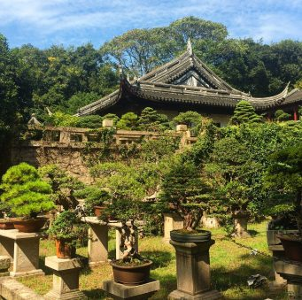 Part of the Bonsai Museum at Tiger Hill