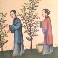 Ladies picking mulberry leaves to feed silkworms in a miniature painting, Macau Museum